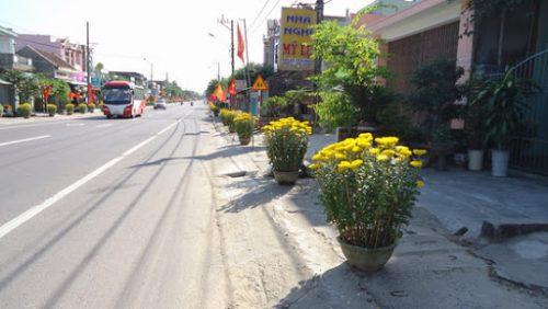 Cần mua đất tại Thị trấn Phù Mỹ